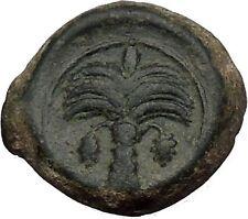 Carthage in Zeugitana 300BC RARE Ancient Greek Coin Horse Palm tree  i52360