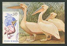 ROMANIA MK 1965 FAUNA PELIKAN PELICAN VÖGEL MAXIMUMKARTE MAXIMUM CARD MC d2761