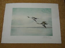 Pencil Signed Leon Danchin Etching of Pintail Ducks Flying
