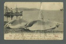NORWAY c1910 DEAD WHALES Whaling Industry Fishing SHIP Ships Boats Boat HARBOR