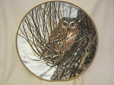 Hiding Place collector plate Saw Whet Owl Seerey-Lester Noble Owls