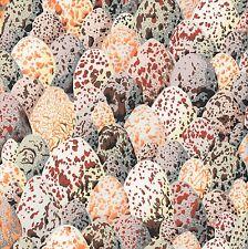 1//2 Yard  Philip Jacobs Snow Leopard ARCADIA Egg Shells NEUTRAL BROWN