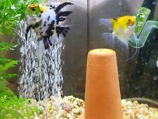 Koi Angelfish Quantity 6 half dollar size or larger
