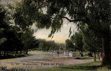 Montevideo Uruguay AK 1910 Paseo del Prado Editor Carluccio gelaufen frankiert