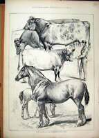 Original Old Antique Print 1876 Prize Winners Peterboro Cattle Show Cart Horse