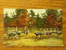 Vintage Postcard Ostrich Farm, Hot Springs, Ark.