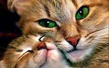 Lovely Cat With Green Eyes Men Sweatshirt S M L XL 2XL 3XL