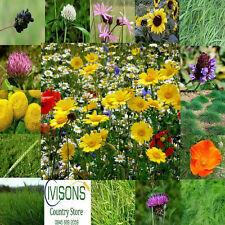 IVISONS PREMIUM WILDFLOWER SEEDS 80/20 ANNUALS PERENNIALS WILD FLOWER 1kg MIX 8