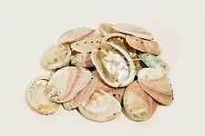 "Red Abalone Sea Shell One Side Polished Beach Craft 2 1/2"" - 4"" (35 pcs)"