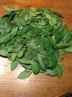 Bay Leaf, Organic Whole Fresh Picked Leaves, Bay Laurus Tree  2oz., Free Ship **