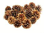Natural Pine Cones 4cm-8cm Size Quality Pinecone Florists Crafts Decorative ML