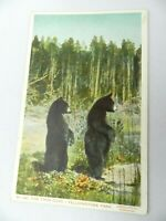 Vintage Postcard No 160 The Twin Cubs (Bears) Yellowstone Park, Haynes Photo