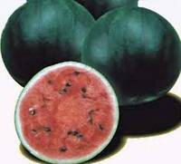 WATERMELON SEEDS, SUGAR BABY, HEIRLOOM, ORGANIC, 500 SEEDS, NON GMO, WATERMELONS