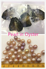 AA+ 10-11mm Near Round Edison Pearl in Oyster,vacuum-packed,pearl in oyster