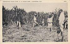 Florida Clewiston Harvesting Sugar Cane U S Sugar Corporation sk3138