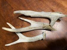 Kansas Prairie Whitetail Deer Antler Shed, dog chews 7.7 oz. weathered