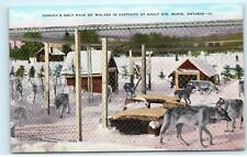 Sault Ste Marie Ontario Canada's Only Pack of Wolves in Captivity Postcard D13