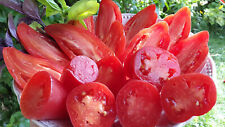 10 graines de tomate Pertchik Donskoy heirloom tomato seeds méth.bio