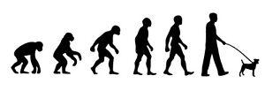 Jack Russell Walker 'Evolution' car sticker, vinyl decal
