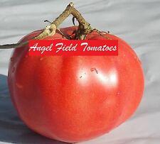 Mortgage Lifter Tomato Seeds 20 Organic Garden Angel Vegetable Seeds