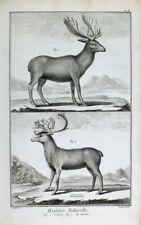 Elch Elk Elan Rentier Reindeer Moose Alce Renna Reno Geweih Horns Bois Deer