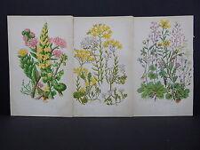 Anne Pratt Botanical, c.1899, Original Color, 3 Prints! English S2#37