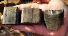 Giant Sloth teeth partials no restorations 100% Fossil