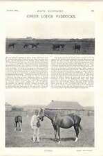1896 Horse Race Green Lodge Paddocks Napoli Palm Flower Springfield