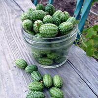 30pc Cucamelon Fruchtsamen Wassermelone Miniatur Obst Hausgarten Pflanze Neuer