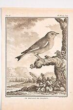 Histoire Naturelle Oiseaux Buffon v 1780 C.Haussard-De Sève le Bruant de France