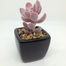 Artificial CACTUS in Black Ceramic PLANTER FIGURINE Succulent Cacti Home Decor C