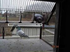 BELGA PICCIONI dello Sputnik, Trappola per Piccioni Viaggiatori/Bicchieri/fantails 60 cm