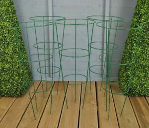 Conical Cage Frame Metal Plant Supports Multipacks Sets of 5 Herbaceous Peony