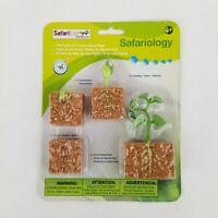 NEW Safariology Life Cycle of a Green Bean Plant Safari Ltd Educational Toy STEM