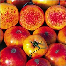 50 seeds Organic Heirloom West Virginia Hillbilly Tomato  New seeds for 2017
