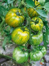 Tomate Green Zébra - sachet de x15 graines (🌿 culture BIO) seeds seed