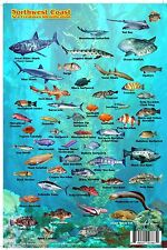 Northwest Coast Sea Creatures Laminated Map & Fish Card by Franko Maps