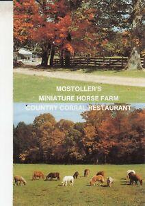 Rare Mostoller's Miniature Horse Farm + Restaurant Postcard - Somerset Pa. RPPC