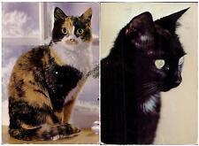 OLD Nice set lot 2 pcs CAT Kitten PC post card 1980th feline used LOVELY