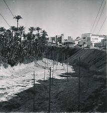 ESPAGNE c. 1950 - La Palmeraie  La Ville  Elche  - Div 10299