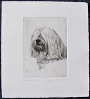 GEOFFREY LASKO - HAVANESE DOG - LISTED ARTIST ORIGINAL ETCHING - S&N - FREE SHIP