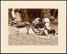 BORDER COLLIE GIRL DONKEY AND CART LOVELY VINTAGE STYLE DOG PRINT READY MOUNTED