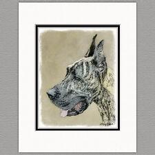 Great Dane Brindle Original Art Print 8x10 Matted to 11x14