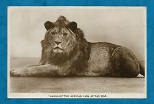 "C1930s RP PC ""ABDULLA THE AFRICAN LION""  AT LONDON ZOO - W.E. MACK PUB'D"