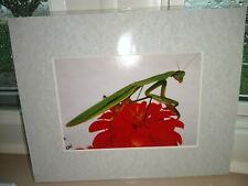 Praying Mantis Picture Photograph With Red flower