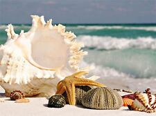 Fotografía Arena Concha Conchas Marinas Playa Verano conchas arte cartel impresión lv3684
