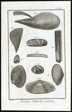 Antique Print-SEA SHELL-COQUILLE DE MER-MUSSEL-Martinet-Diderot-1751