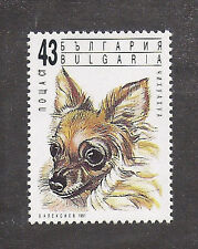 Dog Art Head Portrait Postage Stamp LONG COATED CHIHUAHUA Bulgaria 1991 MNH