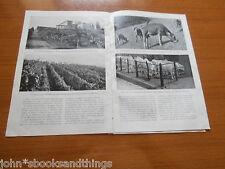 1935 FIRENZE AGRICOLA TOSCANA AGRICOLTURA EPOCA ANNI 30 FATTORIA ALLEVAMENTO
