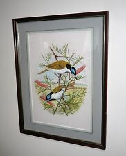 ORIGINAL WATERCOLOUR OF BLUE FACED HONEY EATERS BY AUSTRALIAN  ERIC COOPER 1986
